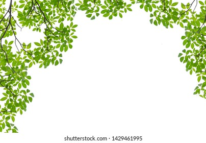Tree Leaf Frame On White Background