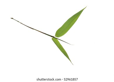 tree leaf isolated on the white  background