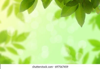 Tree Leaf On Blur Background