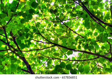 Tree leaf and sun light abstract background.