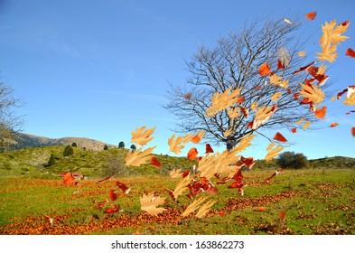 tree leaves air wind autumn wind