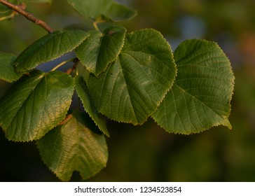 Tree leaves with blurry background