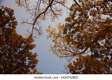 Tree leaves with branches around a forest area unique photo