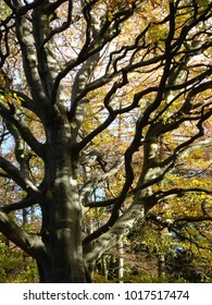 Tree, leaves and branches in the sun