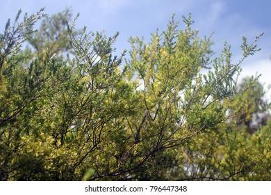 Tree leaves on blue sky