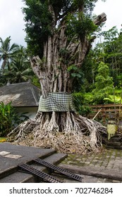 tree of life atthe Pura Tirta Empul