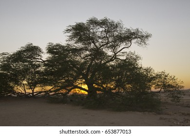 The tree of life in Bahrain. Sunset.
