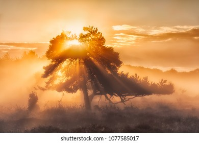 The tree of life with sunrays and a warm glow in Autumn - Oudemolen, Drenthe, The Netherlands