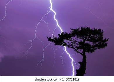 Tree and lightning bolt and storm, lightning bolt and thunderstorm at night