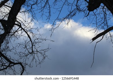Tree limb and branches with billowy white and gray clouds and blue sky