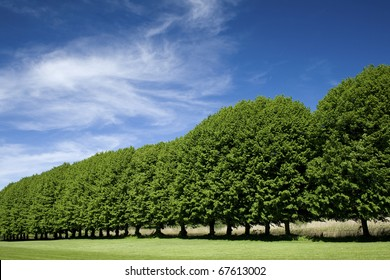 Tree line in formal park.