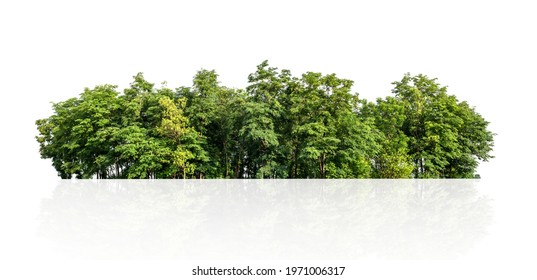 tree line isolate on white background