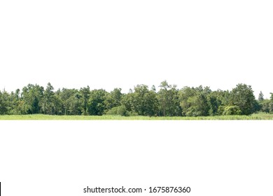 Tree line isolated on a white background