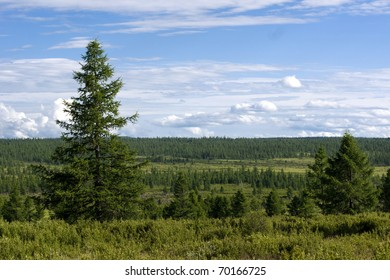 Tree line in north Mongolia