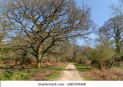 Tree line and pathway at Broomy Inclosure in the New Forest National Park
