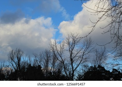 Tree line silhouettes and white billowy clouds with light blue sky