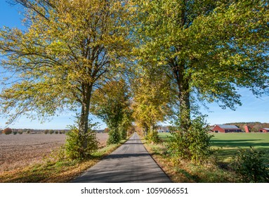 Tree lined avenue outside Linkoping in the countryside of Ostergotland during autumn in Sweden.
