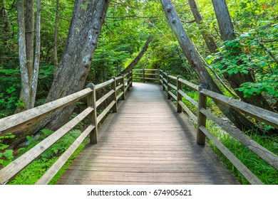 A tree lined boardwalk path in summer leading down to the falls, Tahquamenon Falls Michigan, Upper Peninsula, USA
