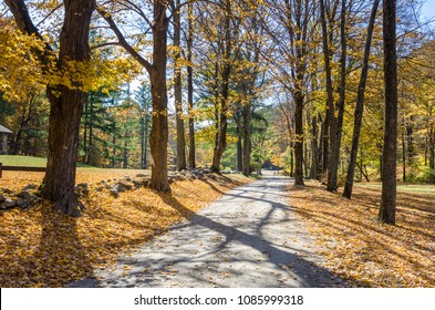 Tree Lined Country Road with Colourful Autumn Leaves on Trees and on the Road. Kent, CT.