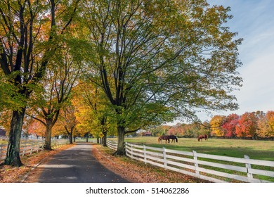 Tree lined country road in rural Maryland during Autumn with Fall Colors and horses grazing in a field