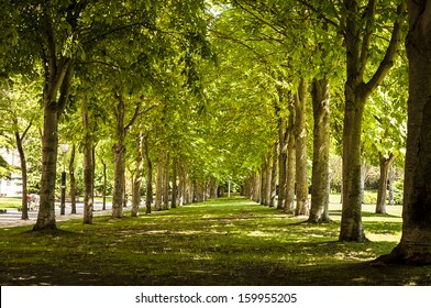 Tree Lined Metro park at vitoria,alava, spain
