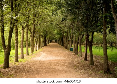 Tree lined path in a park in Mexico City. One point perspective