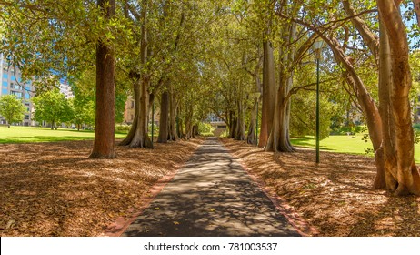 A tree lined path through Treasury Gardens in Melbourne, looking north west towards the old treasury building.