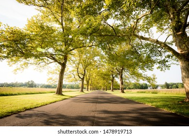 A tree lined road goes into the park entrance leading to a grassy field.