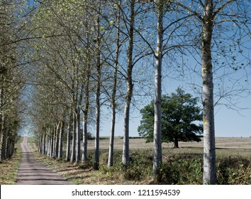 Tree lined roadway