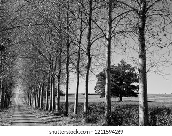 Tree lined roadway in Black and White