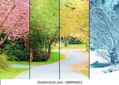 A tree lined street, photographed in all four seasons from the same location. Spring, Summer, Fall, Winter.