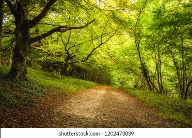 Tree lined track underneath the dense green foliage of a woodland on the Goodwood Estate near Chichester in England