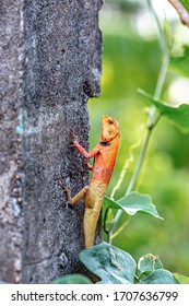 tree lizard remained on the tree and remained motionless, waiting for his prey.