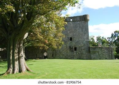 Tree at Loch Leven Castle