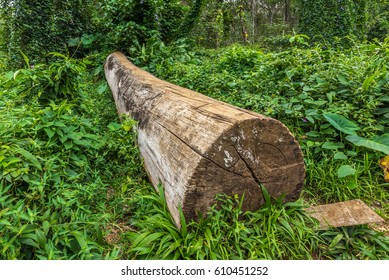 tree log trunk resting on the ground in the hawaiian rainforest - photo taken from manoa falls trail in Manoa near Honolulu, hawaii, oahu, USA