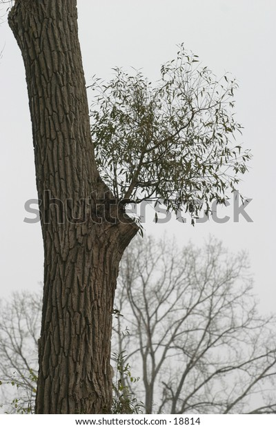 Tree in London Ontario's St. Julian Park
