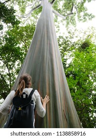 Tree lover touching a big tall tree called mindanao gum eucalyptus rainbow tree