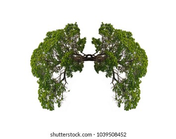 Tree lung in white background