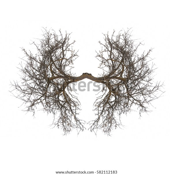tree lungs isolated on white
