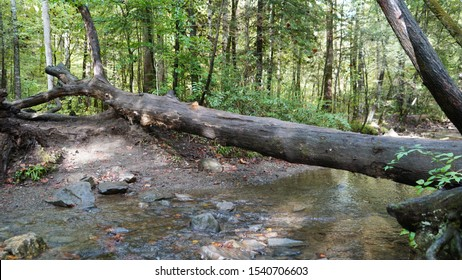Tree lying over babbling brook
