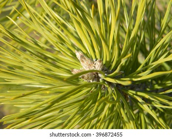 tree macro