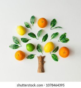Tree made of citrus fruits, oranges, lemons, lime and green leaves on bright background. Creative flat lay nature concept.