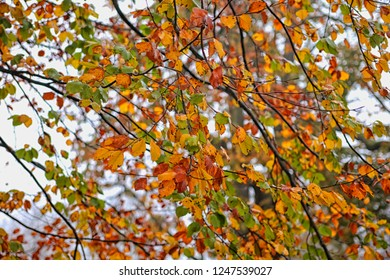 Tree with many fall colors in autumn