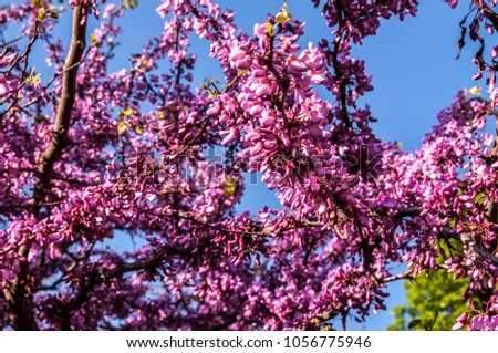 Tree Many Small Pink Purple Flowers Stock Photo Edit Now
