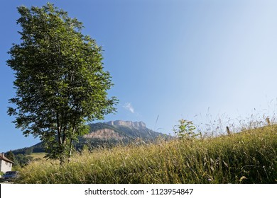 Tree and meadow under the summit of Chamechaude in Chartreuse mountain range