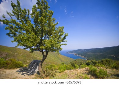 Tree at mediterranean coast