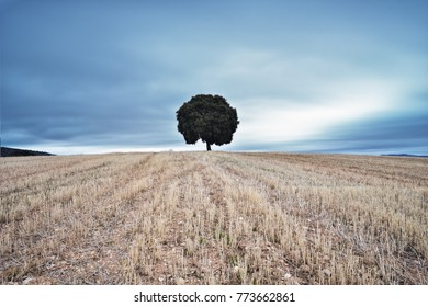a tree in the middle of the  countryside and the sky full of heavy clouds