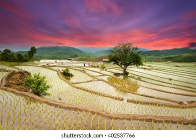 Tree in the middle rice terraces on mountain of twilight
