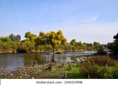 A tree in the middle of a river. Beautiful autumn colors at Kern River wilderness, Hart Memorial Park, Bakersfield, CA.