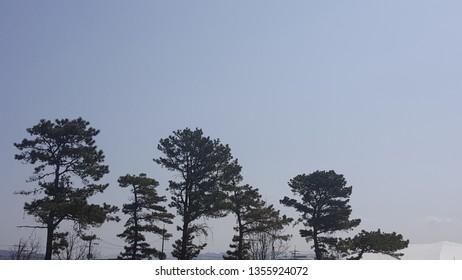 a tree mingled with the sky